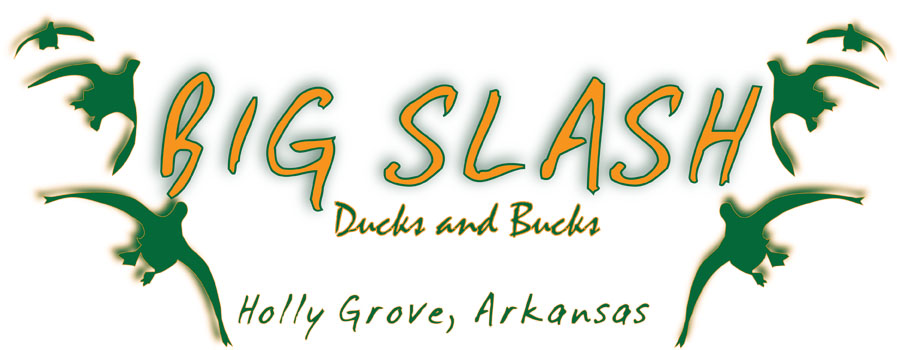 Big Slash Ducks and Bucks header image